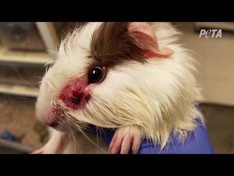 Otra mira dentro de PetSmart, Inc.: un exposé con testigo de PETA