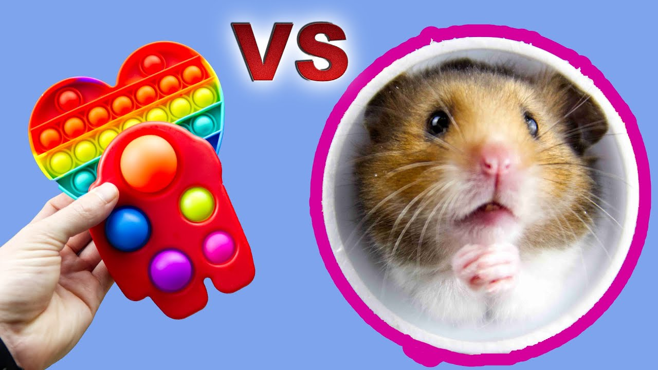 Hamster Escapes from POP IT/ SIMPLE DIMPLE Prison/ASMR #Shorts