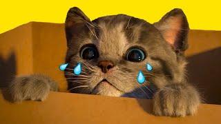 Little Kitten & Friends - Learn with the Cutest Cat Best App for Kids - learning for children #126