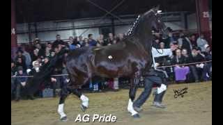 Heart of America Stallion Parade 2014