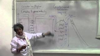 8-[Kidney] Dr.Mona Aziz (contribution of urea-diffrences water and osmotic diuresis)15/3/2016