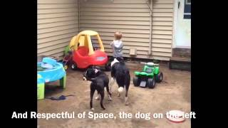 Working With Children, Dog Training St. Cloud Mn, Dog Training Brainerd Mn