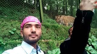 Darjeeling zoo tiger