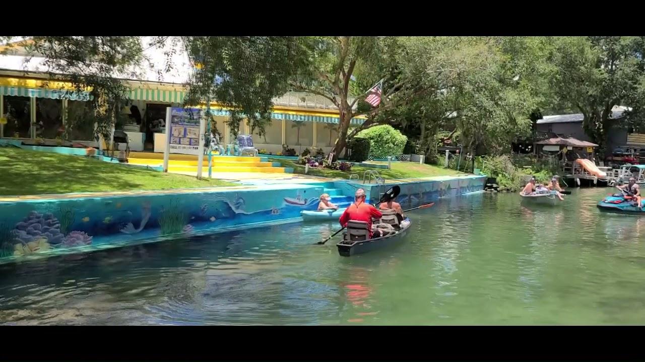 Manatee On A Hot Day On The Weeki Wachee River Florida