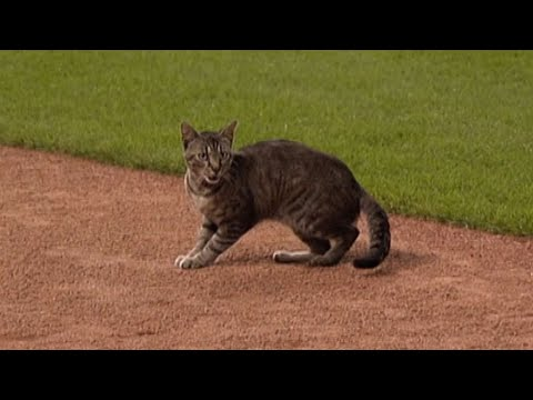 SEA@KC: Feline takes field in Mariners-Royals 5th
