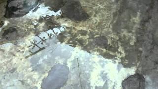Quantec -- Wing Root Chord