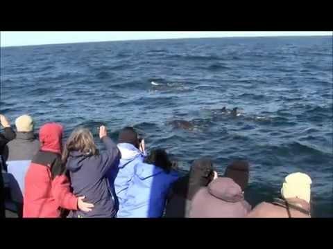 Arctic Whale Tours 5 June 2012 - sperm whales and pilot whales