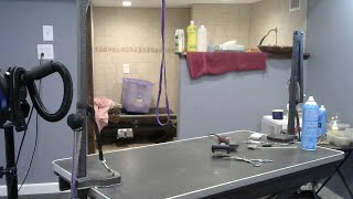DOG GROOMING  -  FLUFF & DRY GROOMING SALON