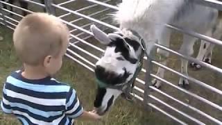 Petting Zoo at the Circus