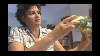 Overnight Pickles, by Naomi Youngstein, violinist