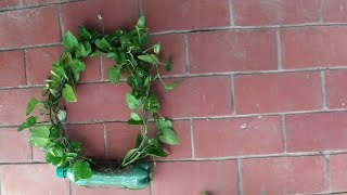 How to make money plant wreath.Door/wall decoration