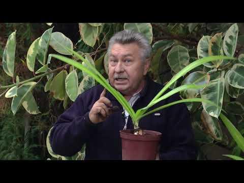 Ставропольский ботанический сад. Пересадка комнатных растений.
