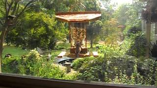 Window Bird-feeder