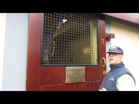 The Irish National Stud, Tuesday 10-October-2017, video 9