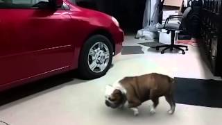 Bail Bond Retrieval Dog Urinates On My Tire