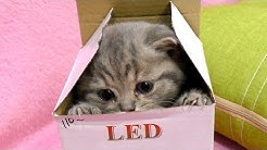 Kitten Street in the box