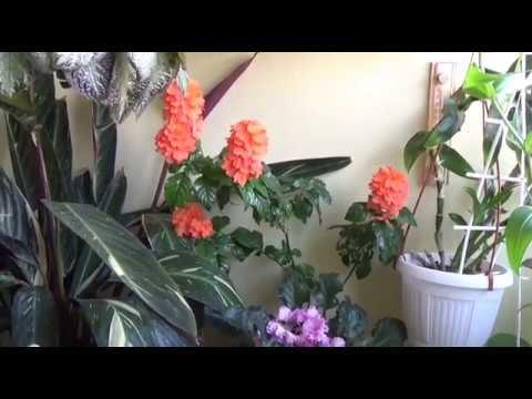 Как часто поливать комнатные цветы летом