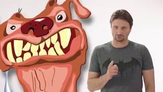 Как отучить собаку кусаться?