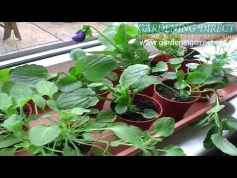 How to plant a Pansy and Viola Hanging Basket