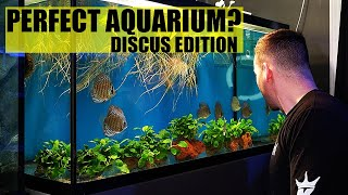 THE PERFECT AQUARIUM - Discus fish tank edition - The king of DIY