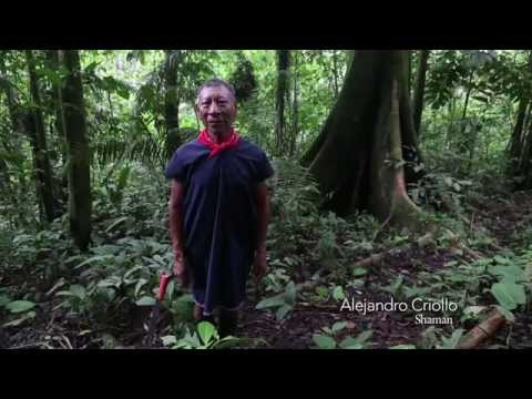 The Cofán: A Clash Between Beliefs In The Amazon