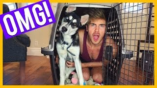 How My Dog Escaped!