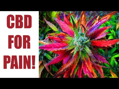 What Is CBD Good For - What Medical Conditions Is CBD Good For?