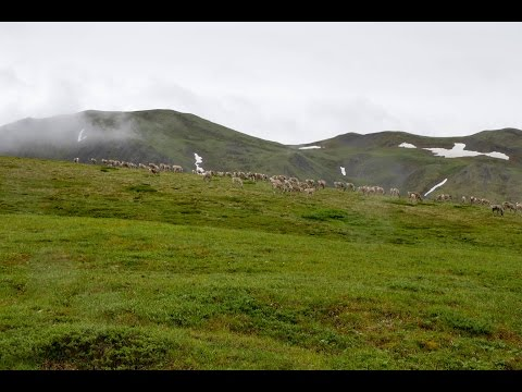 A Tour of Alaska Wilderness (Denali National Park & Alaska Rail)