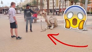 WALKING THE STREETS OF EGYPT!!