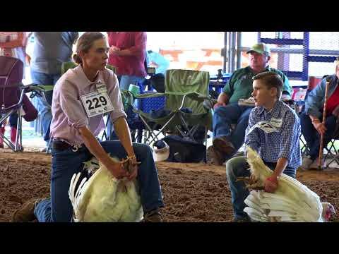Waller FFA and Barnyard Buddies at the Waller County Fair