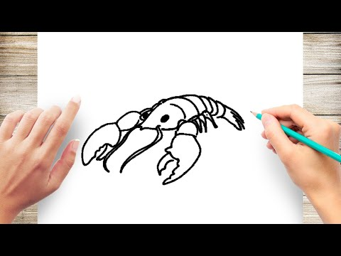 How To Draw Lobster Step By Step For Kids