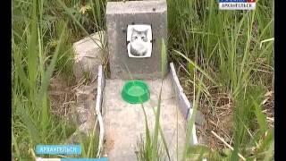 В Архангельске все больше становится несанкционированных кладбищ домашних животных
