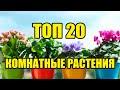 ТОП 20 комнатных растений СССР