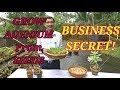 How to Grow Adenium from Seeds : The Business Secret Revealed.