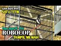 Aksi Kacer Robocop Tampil Mewah Di One Day Kacer Show Glagah Waru Demak Sapu Jagat Sf Pati  Mp3 - Mp4 Download