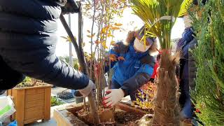플랜트박스에 나무 잘심는 방법