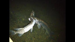Craziest Pike Attacks & Eats
