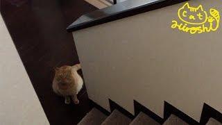 もう2階には先客がいることを覚えたようで 登ってきませんでした。 リビ...
