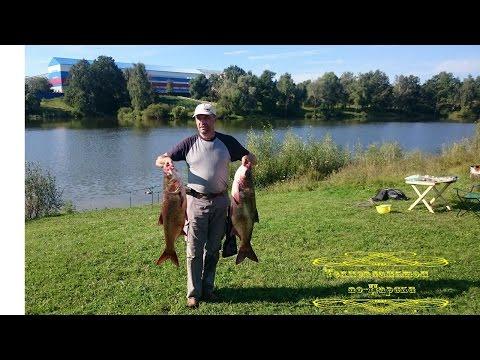 Рыбалка на толстолобика поплавочной снастью.