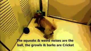 Cricket Gets A Wobble Wag Giggle Ball