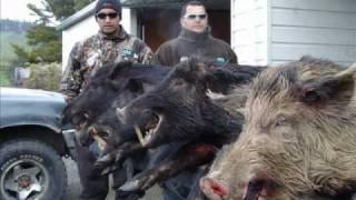 Pig Hunting NZ  100% Grunt Hokianga Hog hunters