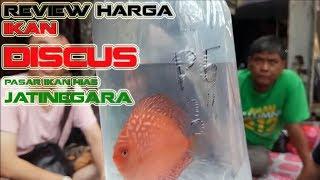 Harga Ikan Discus di Pasar Ikan Hias Jatinegara | Van'sVLog #9