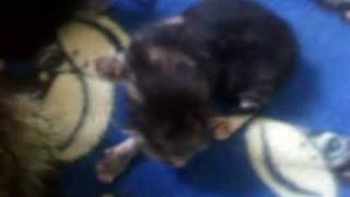 My Cat Breast Feeding Hehehe Cute