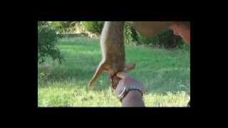 Rabbit versus Scorpion... basic slingshot shooting and hunting
