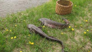 Рыбалка еще один сом на донку наживка лягушка река Мокша