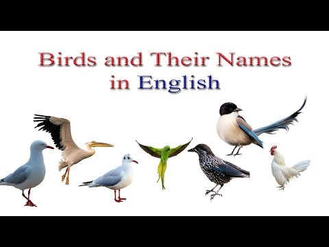 All Birds And Their Names In English | Birds Names In English