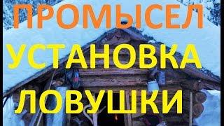 Тайга/Промысел/Установка ловушки на соболя куницу