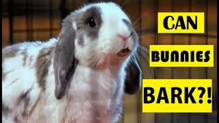 Can Bunnies Bark?! YES! The Truth About Rabbits