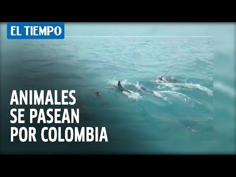 Los animales silvestres que ahora pasean por áreas urbanas de Colombia