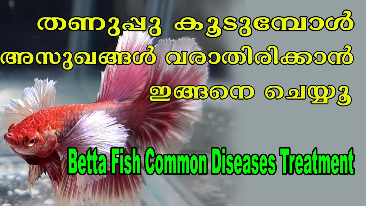 Betta Fish Disease # Betta Fish Care # Fighter Fish Disease# Betta Care# Aqua Tales # Das Intermedia